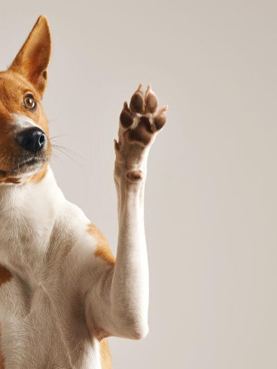 ¿Qué es la depresión post cachorro?
